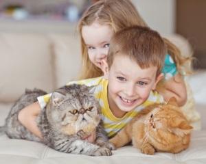 Что именно вызывает реакцию у ребенка?
