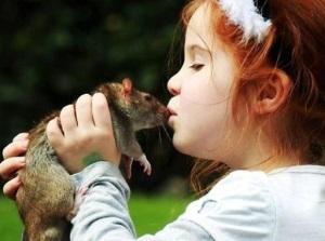 Симптомы мышиной лихорадки у детей