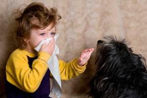 Аллергический кашель у ребенка - симптомы и лечение