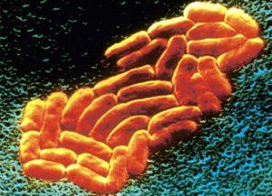 Понятие и характеристика болезни