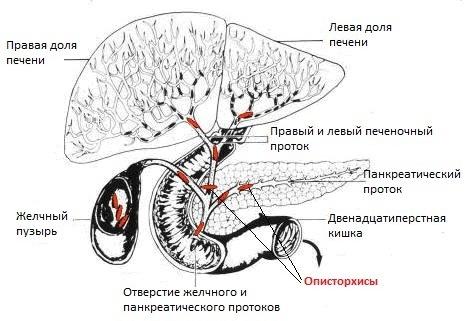 Причины возникновения в организме