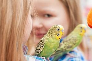 Аллергия на попугаев у детей - симптомы