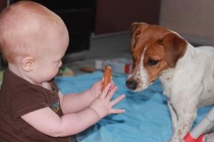 Аллергия на собаку у ребенка - симптомы
