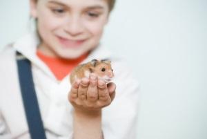 Аллергия на хомяков у детей