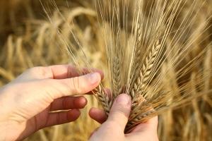 Аллергия на пшеницу у ребенка