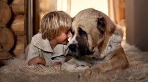 Обязательно нужно ли избавиться от животного в доме?