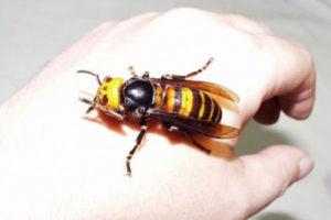 Другие насекомые, способные спровоцировать недуг